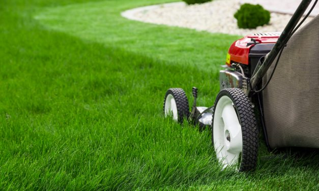 How To Start A Lawn Care Business That Succeeds
