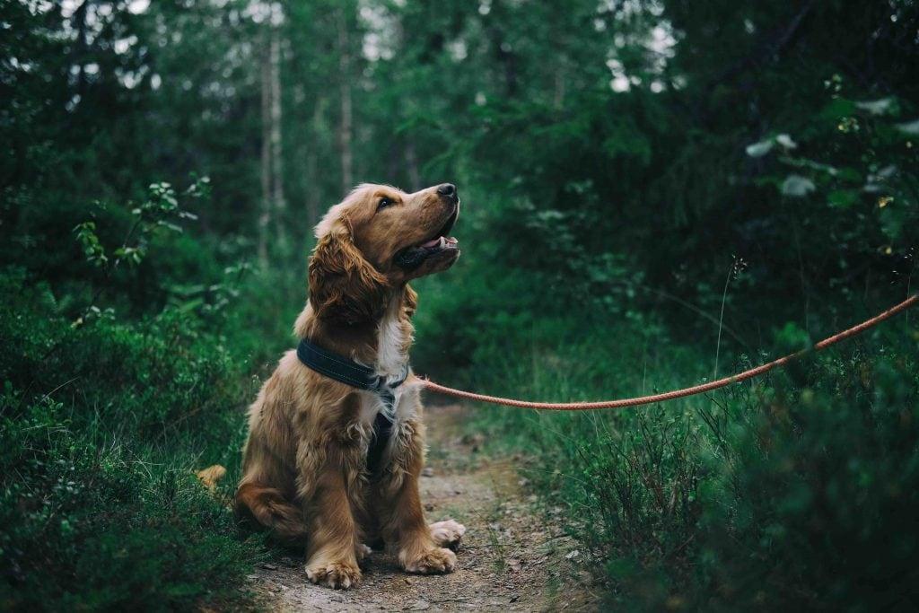 starting-a-dog-walking-business