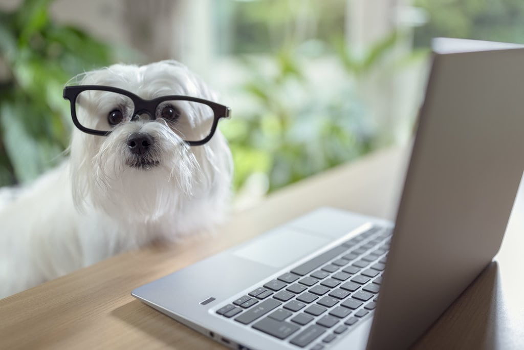 Website For Pet Sitting Business