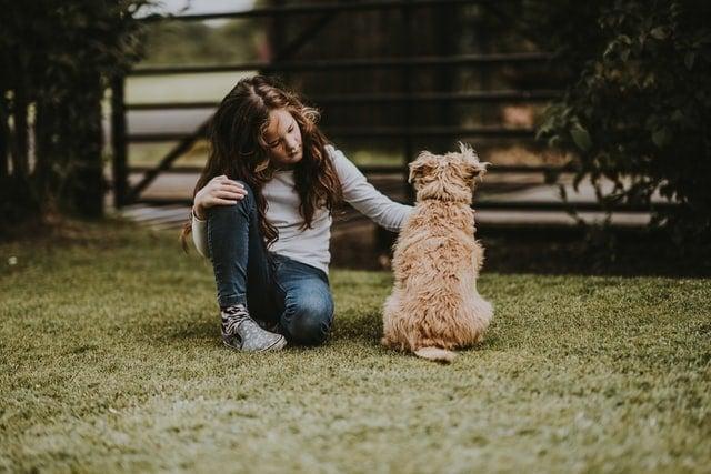 Pet Sitting Business